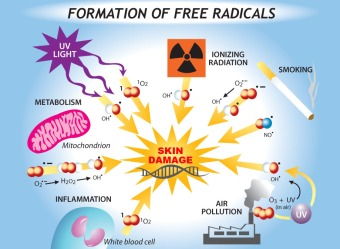 free-radicals-damage-to-the-cell