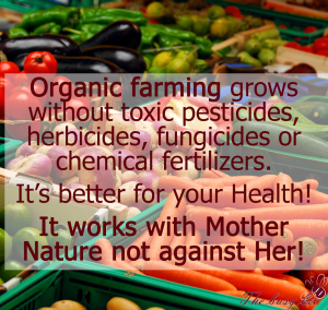 organic-farming-busy-bee-holistic-health